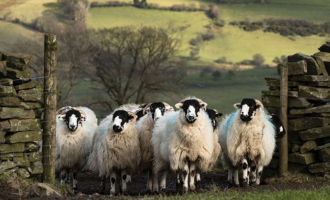 British wool sed in a wide range of products, including carpets, bedding, apparel, furniture and craft items.