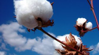 Advanced nonwoven technologies can compensate for the higher price and variability of cotton fiber.