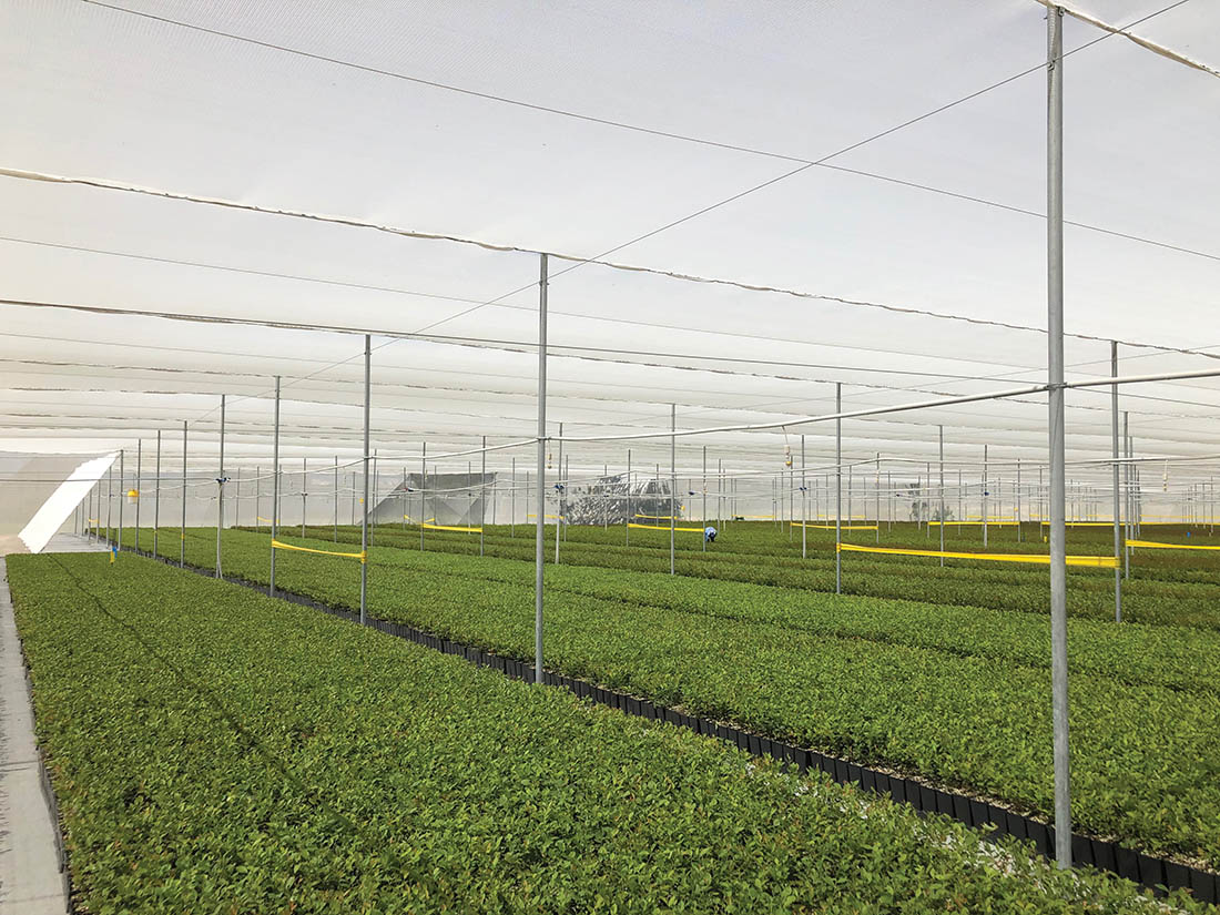 Woven nets provide protection for blueberry crops