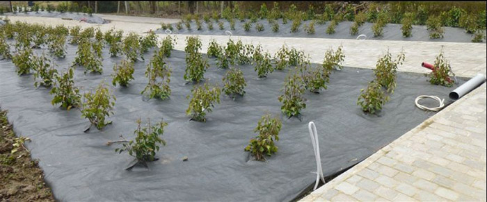 Landscape fabric for weed control