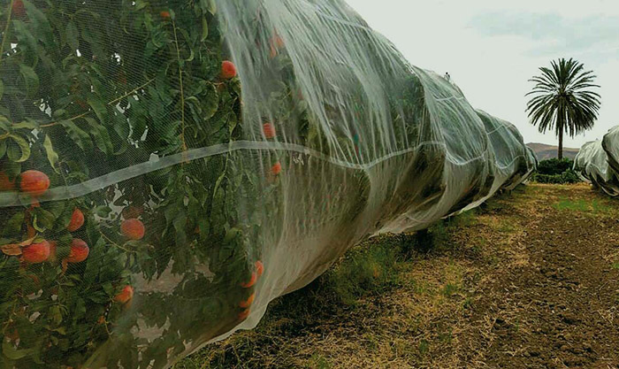 Protective nets for citrus fruits.