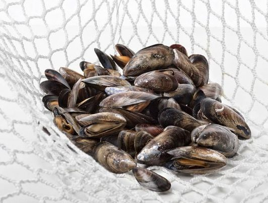 Wood-based mussel nets with LENZING Lyocell fibers for aquatic farming.